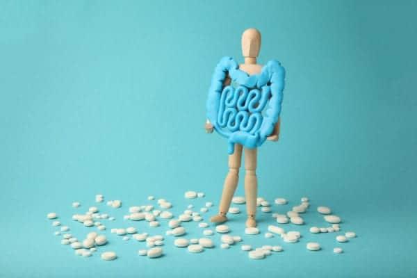 Fermenti Lattici Apparato digestivo stilizzato su modellino uomo